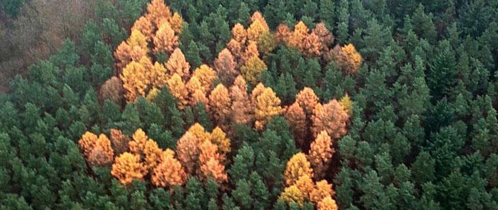 Les nazis ont créé une croix gammée avec des arbres qui n'a été trouvée qu'après 60 ans !