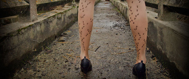 La formicophilie est l'attirance sexuelle par les insectes !