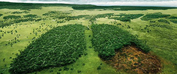80% of the forests on Earth have already been destroyed!