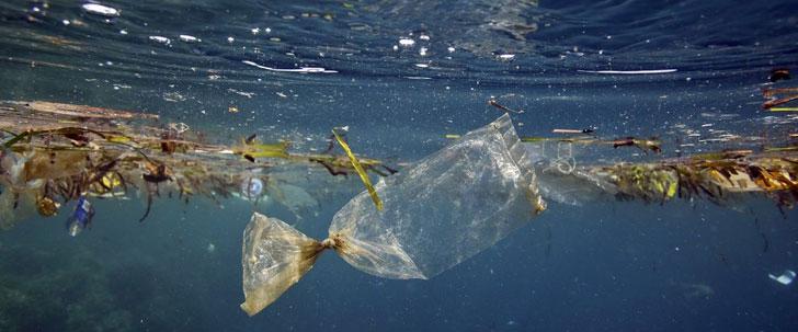 En 2050, il y aura plus de plastique que de poissons dans les océans !