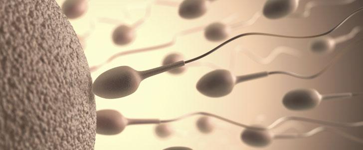 La plus grande banque de sperme au monde exporte du sperme à plus de 60 pays !