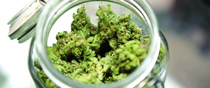 Le cannabis peut-il traiter le cancer ?