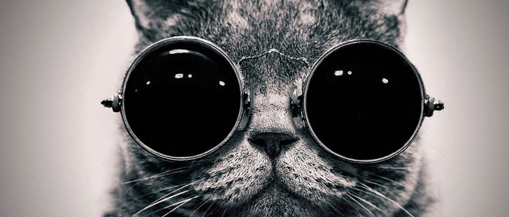 La CIA a essayé d'espionner les soviétiques avec des chats !