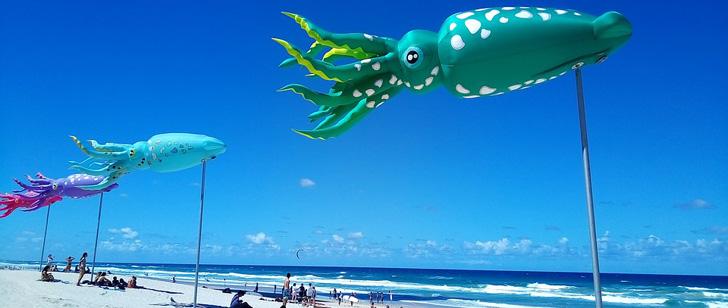 Le Saviez-vous ? Les calamars peuvent voler et il sont plus rapides que Usain Bolt ! Calamar-volant