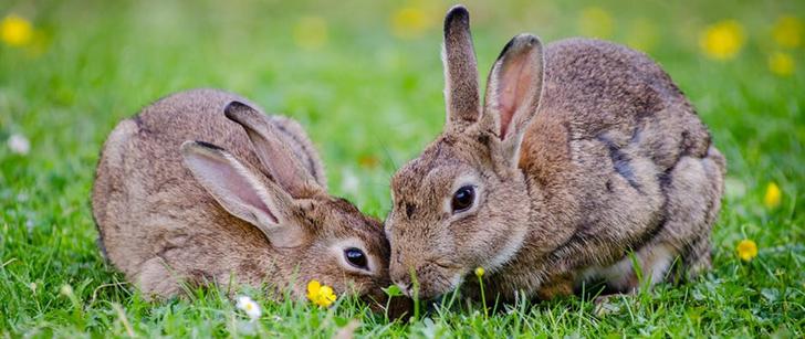 Les lapins n'aiment pas les carottes !
