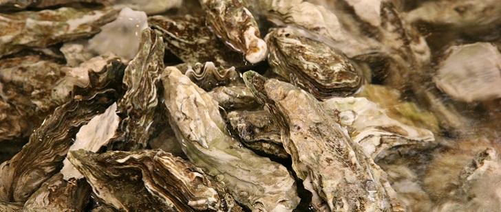 Le saviez-vous?Les huîtres peuvent vivre jusqu'à 20 ans ! Huitre