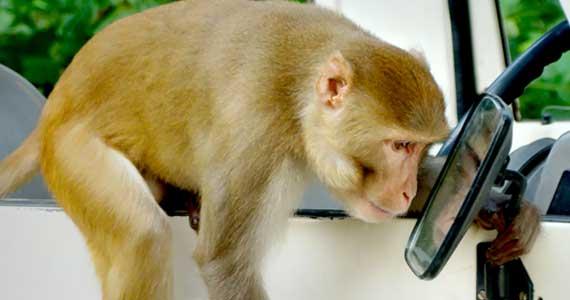 La reconnaissance de soi chez les animaux et le test du miroir
