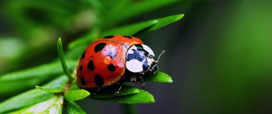 les insectes ne ressentent pas la douleur !