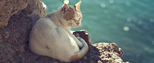 Les chats peuvent boire de l'eau de mer pour se réhydrater