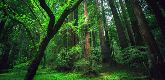 La forêt amazonienne dépend du Sahara !