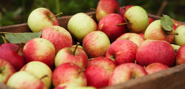 Le saviez-vous ? Une pomme le matin a plus de caféine qu'une tasse de café ! Pomme-cafe