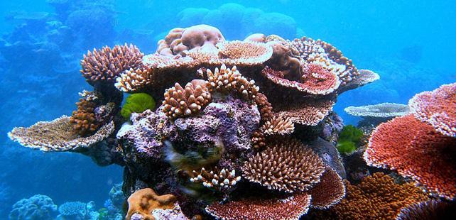 Le saviez-vous ? La merde humaine est responsable de la détérioration des récifs coralliens ! Recifs-coralliens