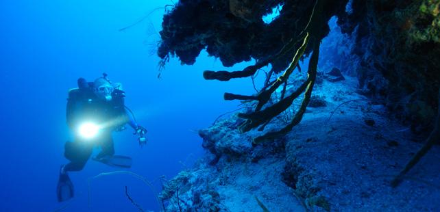 Le saviez-vous ? On a seulement exploré 5% des océans ! Ocean-exploration