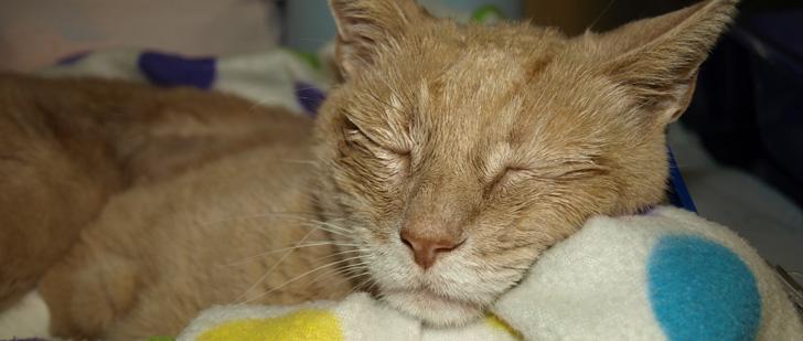 Le maire d'une ville en Alaska est un chat depuis 15 ans !