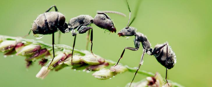 Les fourmis s'étirent et bâillent le matin en se réveillant !