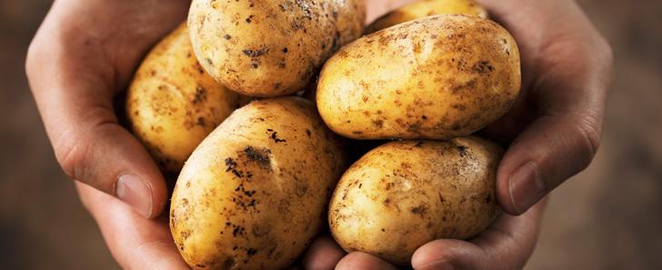 Les pommes de terre ont plus de chromosomes que les humains !