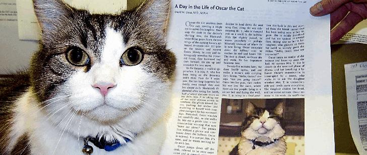 Oscar, le chat qui prédit la mort !