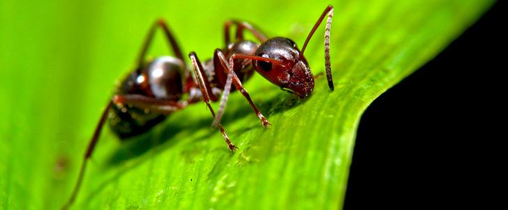Les fourmis survivent dans un micro-ondes en marche !