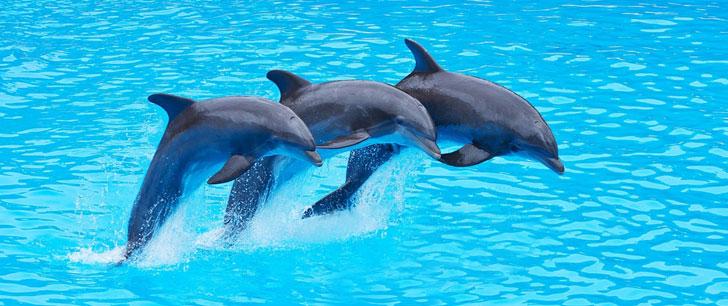 Les dauphins ont la plus longue mémoire sociale de tous les animaux !