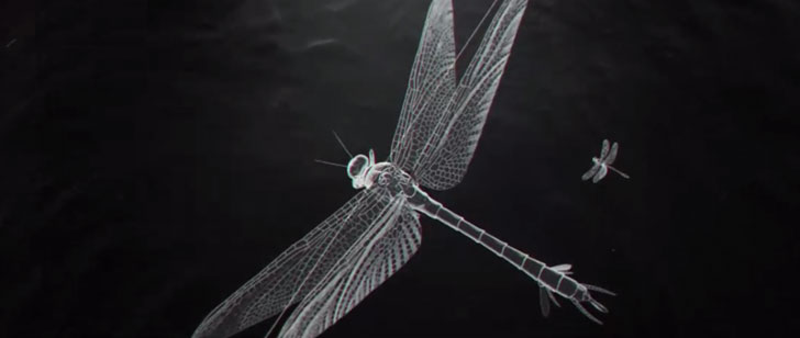 Le saviez-vous ? Le plus gros insecte ayant jamais existé était de la taille d'un faucon ! Meganeura1