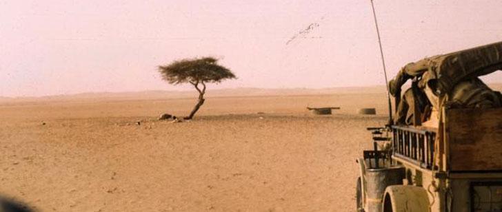 L'arbre le plus isolé de la Terre a été renversé par un conducteur ivre !