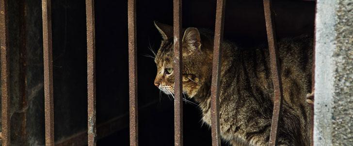 Les habitants d'une province en Chine mangent environ 10 000 chats par jour !