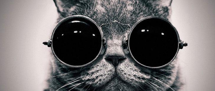 Le saviez-vous ? La CIA a essayé d'espionner les soviétiques avec des chats ! Chat-espion-cia
