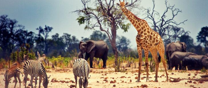 Quel animal tue le plus d'humains chaque année ?