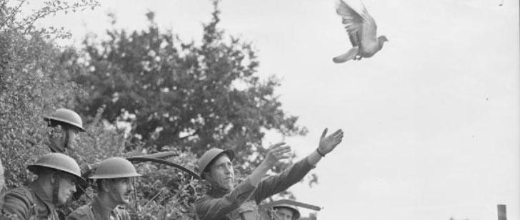 Le saviez-vous ? Un pigeon a sauvé 200 soldats durant la Première Guerre mondiale ! Cher-ami