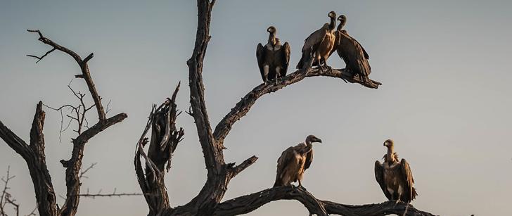 Il existe une communauté en Inde qui offre ses morts aux vautours au lieu de les enterrer !