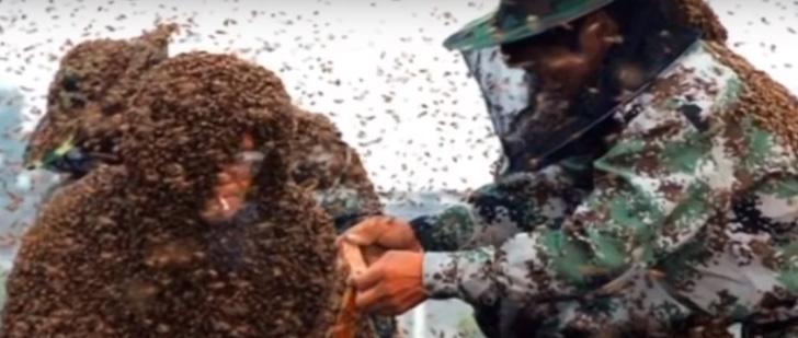 Le record du plus grand nombre d'abeilles sur un corps humain sans protection !