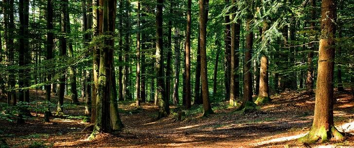 hylophobie : phobie de la forêt