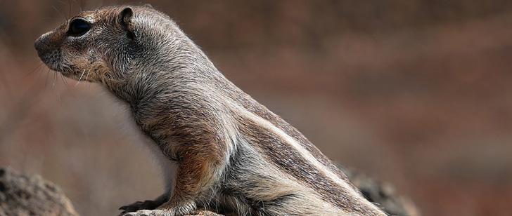 écureuils espions en Iran
